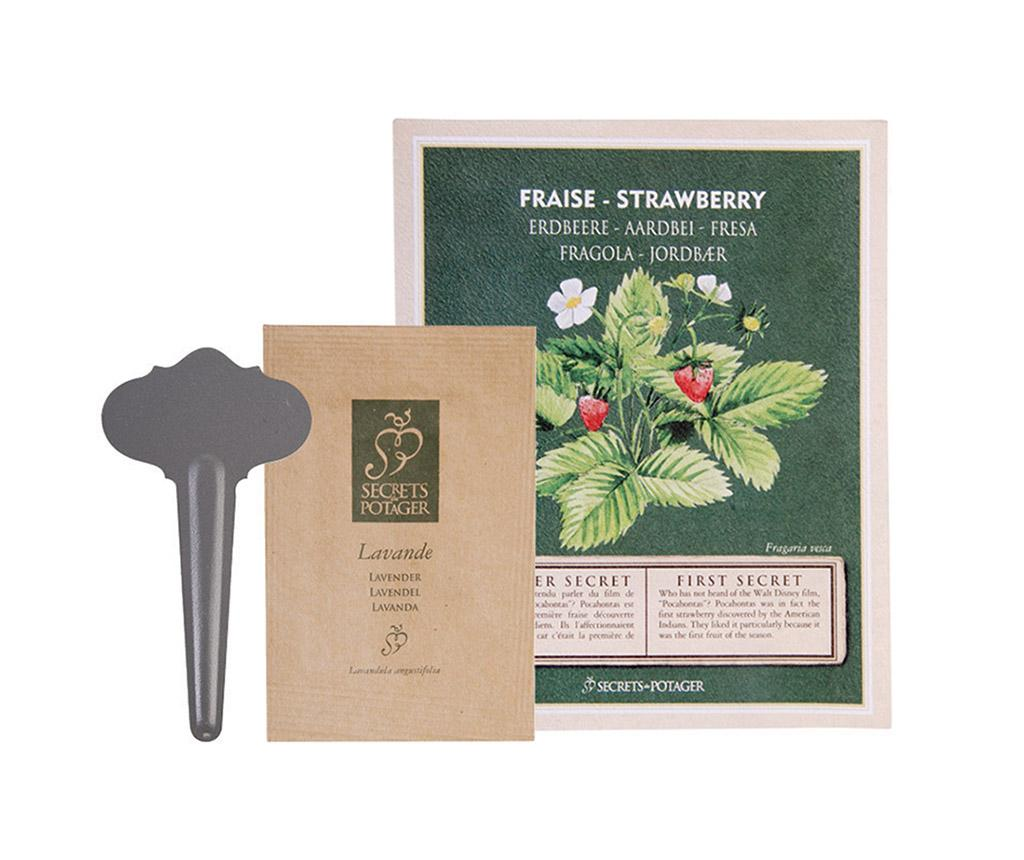 Pachet cu seminte de capsuni Growing Healty Strawberry